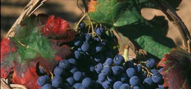 La Sagra del Vino Mandrolisai nel cuore della Sardegna!