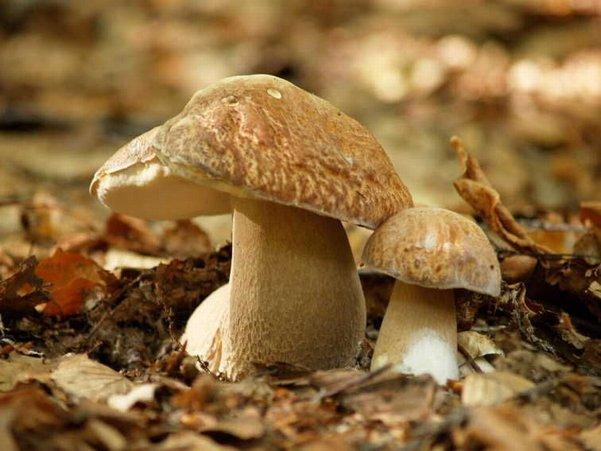 Penne ai Funghi Porcini e Salsiccia