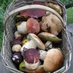 funghi-funghi