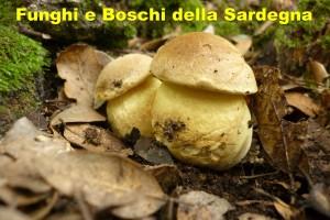 Funghi e Boschi della Sardegna